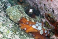 Octopus-side-1