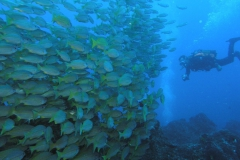 05-Fusiliers-Wall-_-Diver