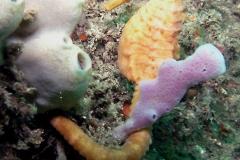Yellow-seahorse
