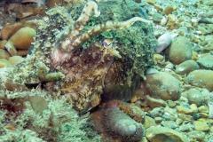 Littlehampton 06-06-06 cuttlefish 3