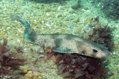 Littlehampton 06-06-06 dogfish 10
